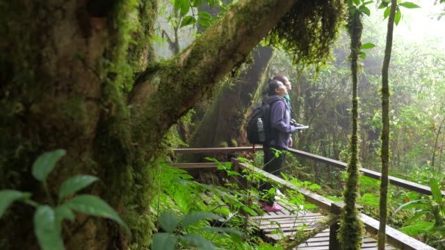 Hikers Walking Bridge In Rain Forest JungleHiking Family Trekking Through Dense Rainforest Nature