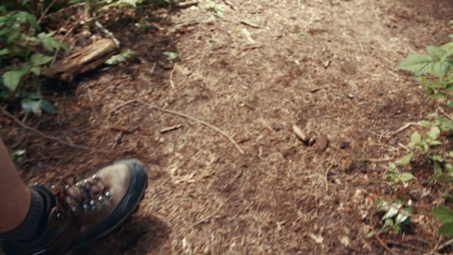 Hiking POV Boston Terrier Dog Slow Motion video