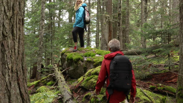 hiking couple explore old growth cedar and fir temperate rainforest - pantaloni capri video stock e b–roll