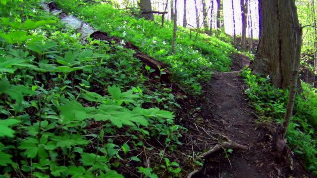 hiking in ontario 2 - trillium video stock e b–roll