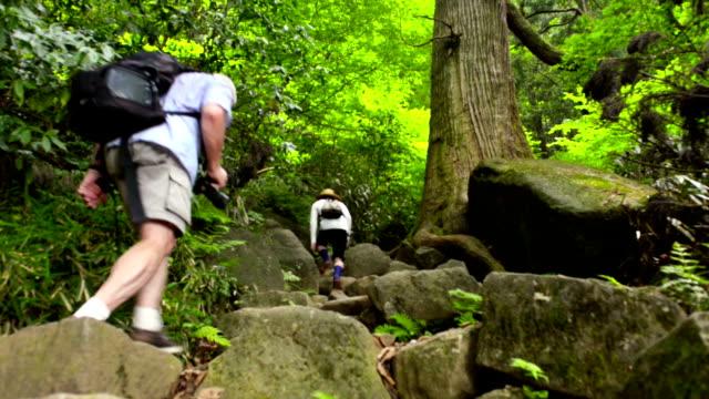 自然をハイキング ビデオ