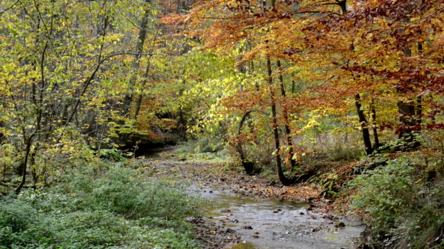 hiking path through Maisinger Schlucht (canyon) in Bavaria (Germany). small river flowing. Beech forest around. – film