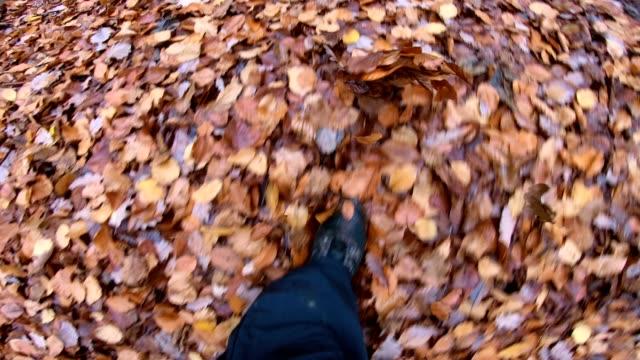 vidéos et rushes de randonnée à travers la forêt de feuillus, hêtres laisse en forêt, automne, automne, été indienne, spessart, bavière, 4k - nervure