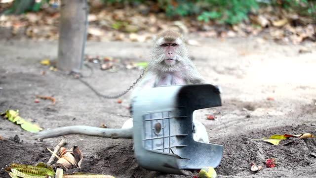 komik ve komik maymun kıçını göster - makak maymunu stok videoları ve detay görüntü çekimi
