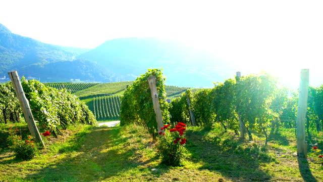 Hills with vineyard video