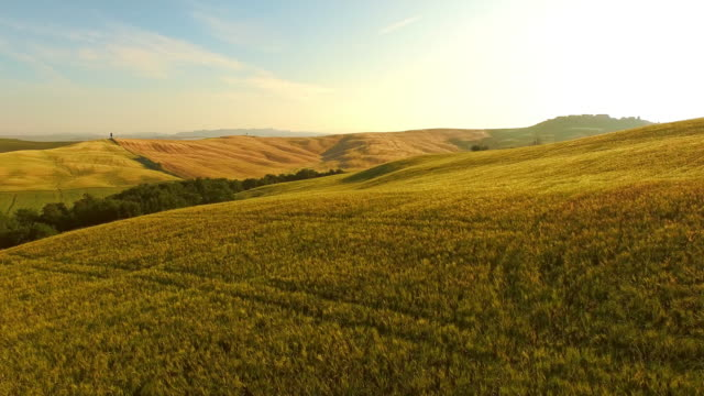 AERIAL Hilly fields in Tuscany video