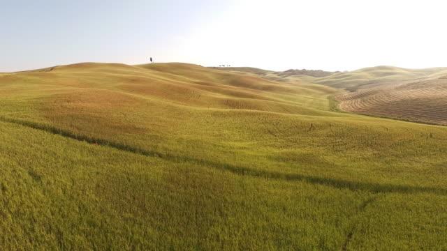 vídeos de stock e filmes b-roll de hilly aérea de campos na toscânia - multicóptero