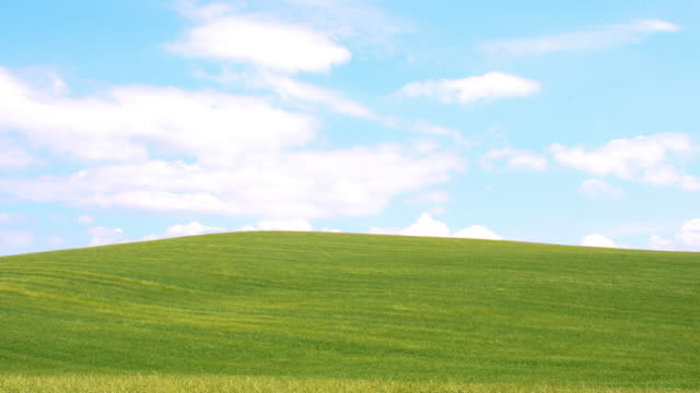 Hilly meadow in the wind Long shot of a green meadow in hilly countryside of Tuscany. Florence. Italy. The footage was shot in raw. Also available in 4K resolution. grass area stock videos & royalty-free footage