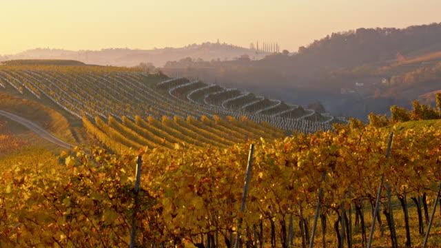 ds kuperade vingård vid solnedgången - steiermark bildbanksvideor och videomaterial från bakom kulisserna
