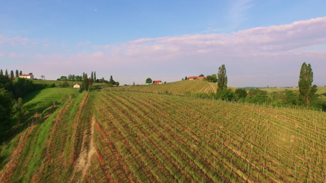 AERIAL Hilly vineyard on countryside video