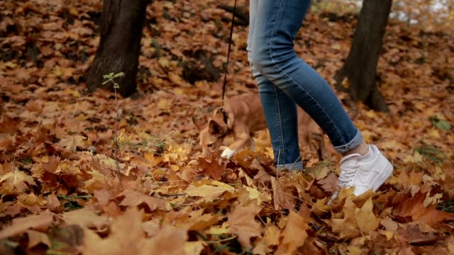 Hipster girl taking dog for walk in autumn video