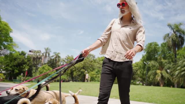 hipster-mann und hunde auf einem spaziergang - hundesitter stock-videos und b-roll-filmmaterial