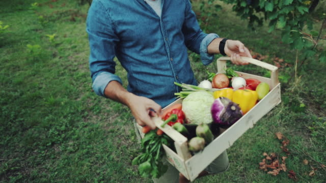 vídeos de stock e filmes b-roll de hipster man with grocery box - vegetables