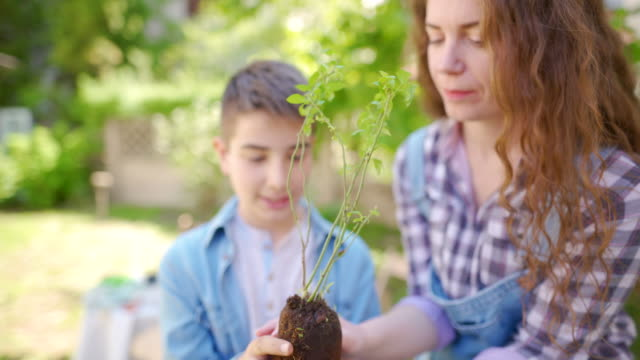 his first plant - gardening video stock e b–roll
