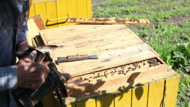 Hive. video