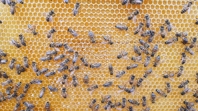 Hive with bees, close-up slow motion video. video