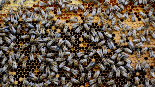 vídeos y material grabado en eventos de stock de colmena con abejas, vídeo de primer plano. - insecto himenóptero