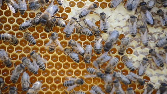 Hive with bees, close-up video. video