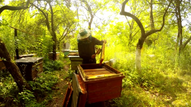 Hiver in Mask Knocks Bees From Frame Angry Incects Fly Around Apiary in Forest video