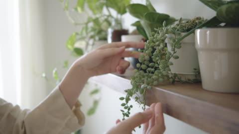 stockvideo's en b-roll-footage met hobby thuis : hipster vrouwelijke decoreren en zorgzame planten in haar kamer - decoraties