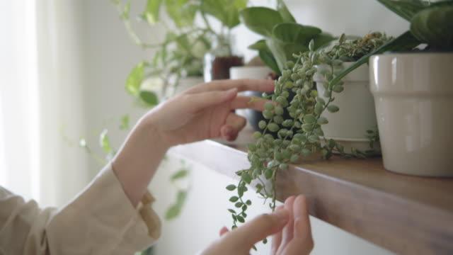 vídeos de stock, filmes e b-roll de hobby at home : hipster feminino decoração e plantas carinhosas em seu quarto - decoração