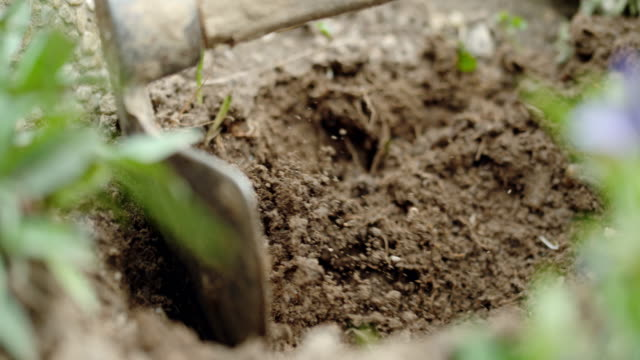 SLO MO Hoeing the soil Super slow motion close up shot of hoeing the soil in vegetable garden. plow stock videos & royalty-free footage