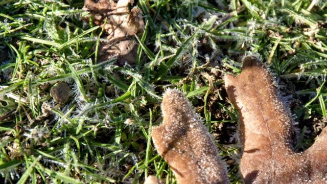 hoja en el tiempo - eucalyptus leaves bildbanksvideor och videomaterial från bakom kulisserna