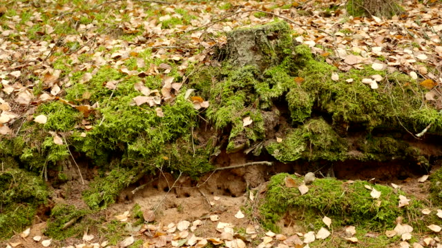 Holes in the Ground. Autumn daytime. Smooth dolly shot. video