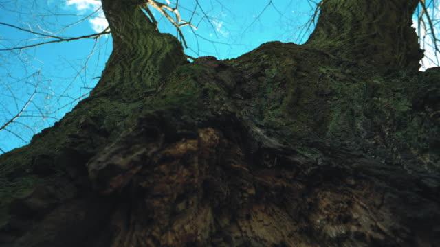 中空木の幹 - 中林大樹点の映像素材/bロール