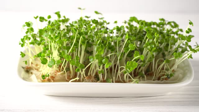 Home business on the cultivation of micro greens.