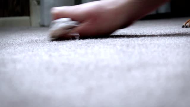 hausbesitzer räumt dog pee auf teppichboden auf - schmutzfleck stock-videos und b-roll-filmmaterial