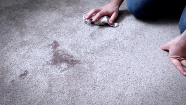 ホームオーナーはカーペットの床に犬のおしっこをクリーンアップ - ネコ科点の映像素材/bロール