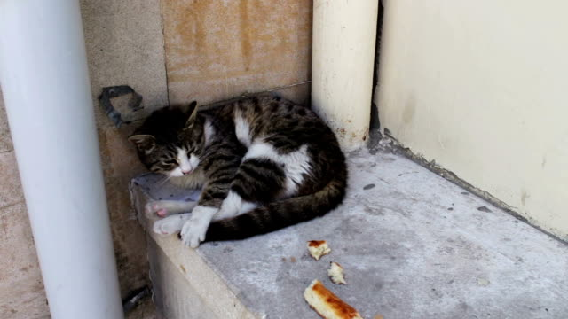 Homeless cat lies curled up and tries to sleep, next to a slice of bread. The problem of the homeless, no one unnecessary animals video