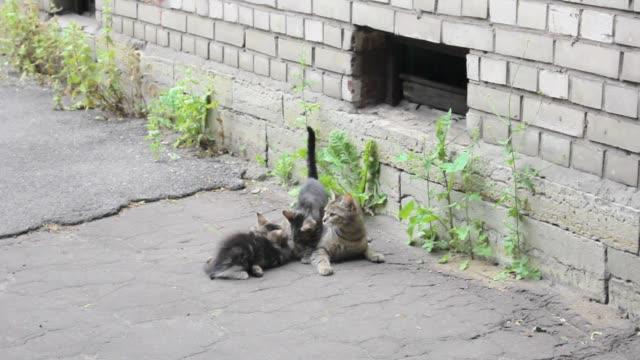 vídeos y material grabado en eventos de stock de gato sin hogar joven mamá alimentación gatitos acostado amamantando lindo - animal joven
