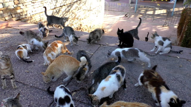 Homeless cats video