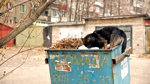 Homeless Dog Eating Garbage homeless dog eats in the trash homeless person stock videos & royalty-free footage