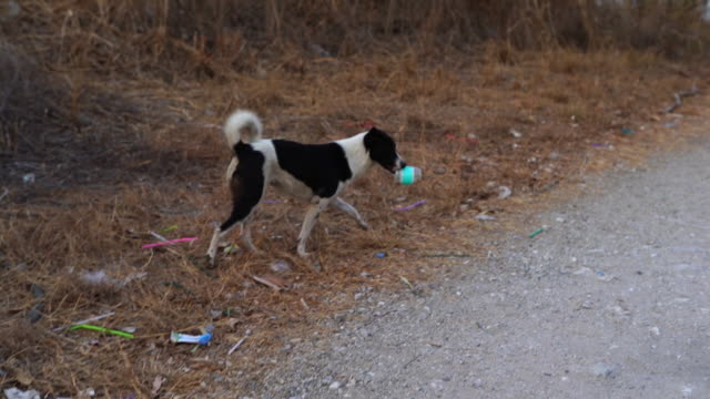 vídeos de stock e filmes b-roll de homeless dog try to eat food from plastic bottle , waste pollution with animals , environmental conservation concept - desperdício alimentar