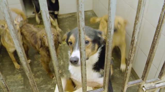 Homeless Dogs Bark in Cages. Shelter for Pets