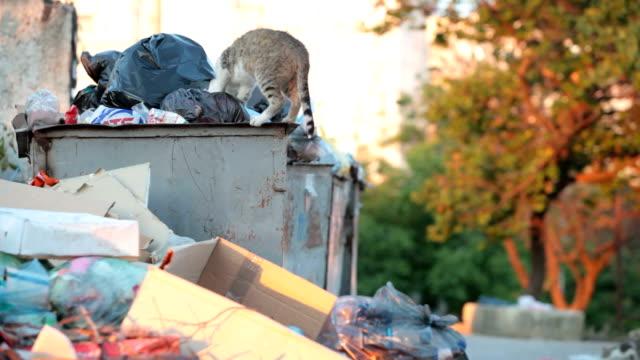 vídeos de stock e filmes b-roll de sem-abrigo, fome gato em contentores de lixo - lata comida gato