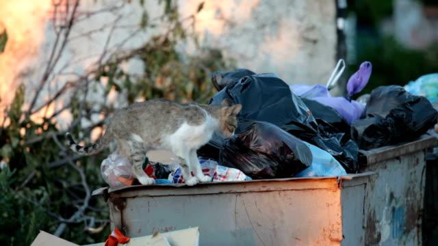 vídeos de stock e filmes b-roll de sem-abrigo, fome gato - lata comida gato