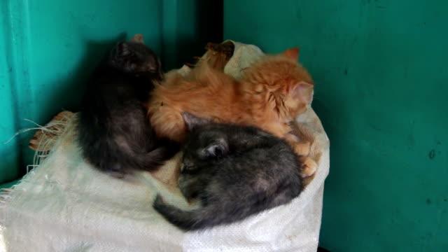 Homeless Kittens Sleeping on a Bag video