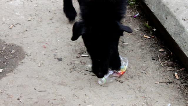 homeless on the street black dog gnaws a plastic bottle - pet bottles bildbanksvideor och videomaterial från bakom kulisserna