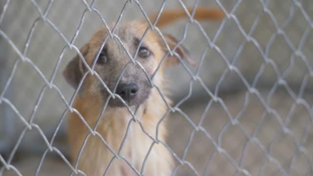 kafeste evsiz köpek yavrusu ve çıkış yolu bulmak, yavaş hareket. - kafes sınırlı alan stok videoları ve detay görüntü çekimi