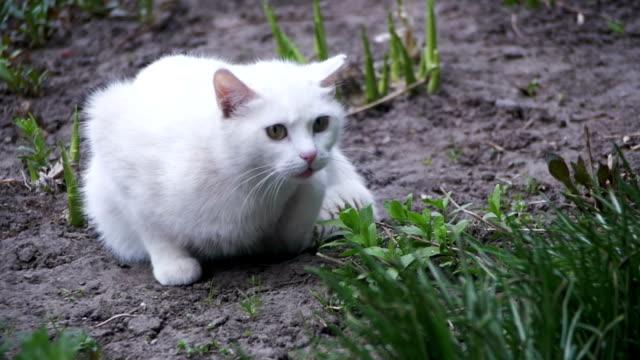 Gato blanco sin techo en el suelo en el parque de la ciudad. Cámara lenta - vídeo