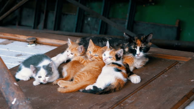 vídeos y material grabado en eventos de stock de los gatitos salvajes sin hogar y el gato de la madre de enfermería están acostados en la calle en la basura - animal joven