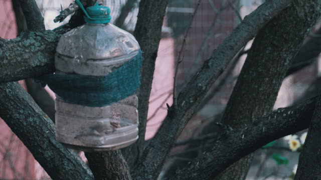 Homemade Birdhouse from a Plastic Bottle with a Sparrow Inside on a Tree in Spring