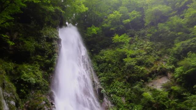 丹沢の hondana 滝 - 夏点の映像素材/bロール