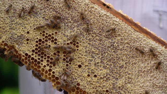 honey bees entering bee hive (close up) - apicoltura video stock e b–roll