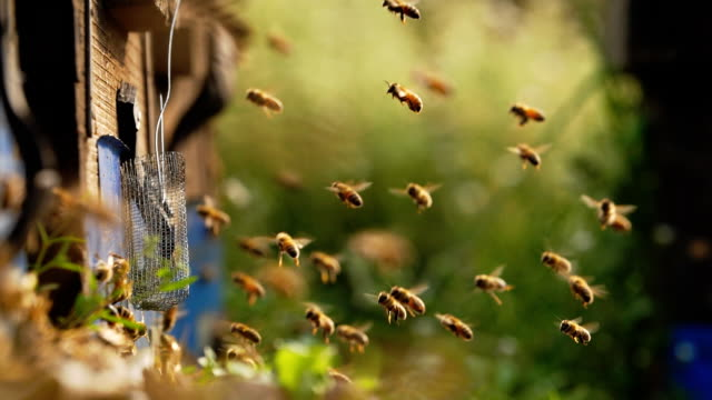honey bees flying around beehive in meadow,slow motion - alveare video stock e b–roll