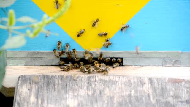 Honey bees in flight. video